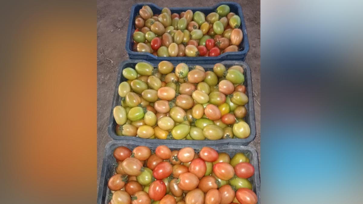 dhoni farming 8 0