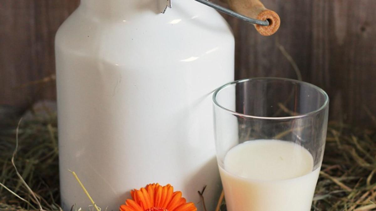 घोड़े के दूध के फायदे 4