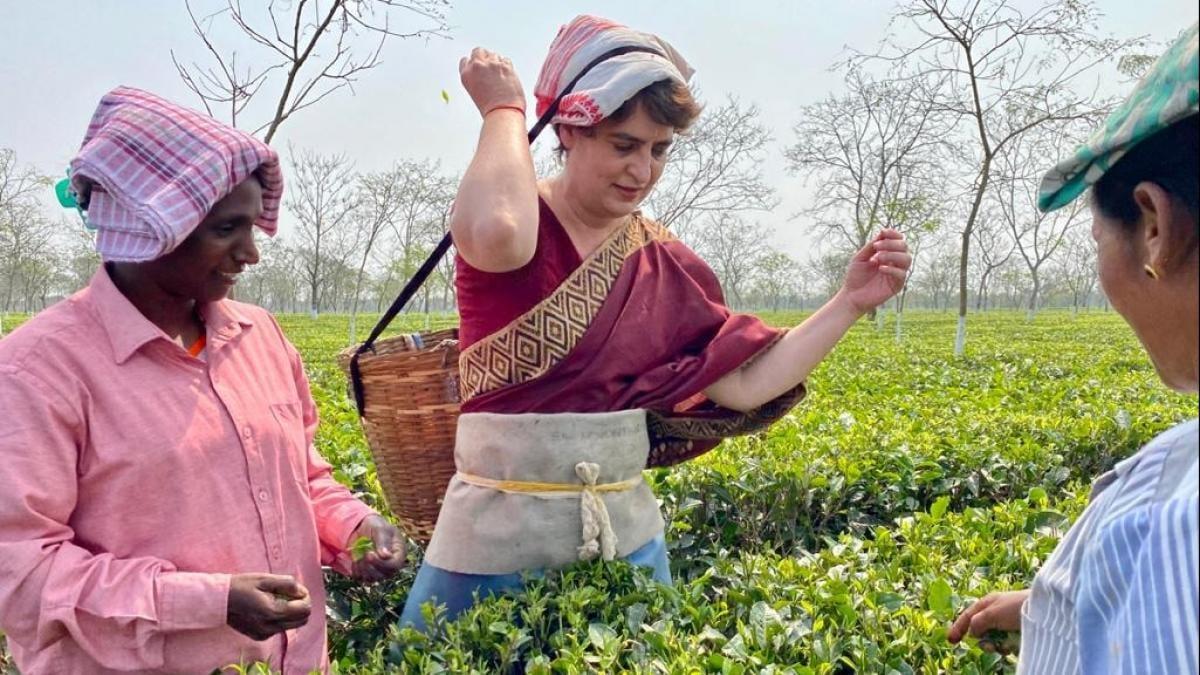असम के तेजपुर में चाय बागान मजदूरों से मिलेंगी प्रियंका गांधी, महाभैरव  मंदिर भी जाएंगी - Priyanka Gandhi assam visit congress election campaign  temple visit - AajTak