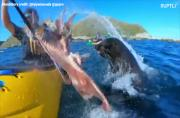 Whip-SPLASH! Seal slaps man in the face with an octopus