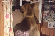 Semyon the bear's friendship with owner raises eyebrows