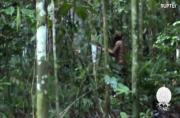 Last of his tribe emerges in newly released Amazon footage