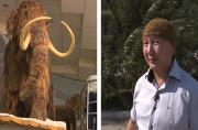 A real mammoth-hair hat goes on sale for $10,000!