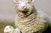 World's most famous sheep and the first cloned mammal: All about Dolly