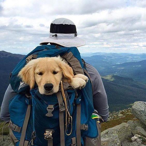 「travel with dog」の画像検索結果