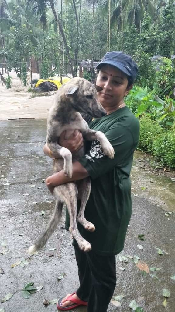 Rescue Relief For Cats
