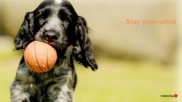 20 dog quotes every dog lover must read - Information News