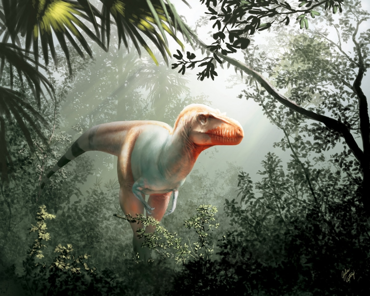 A handout photo made available on February 10, 2020 by the University of Calgary and Royal Tyrrell Museum shows an artist's impression of a Thanatotheristes degrootorum, a newly-discovered species of T-Rex. (Image: AFP)
