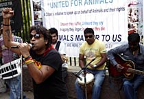 Protest against ill treatment of animals