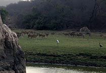 A scene at Ranthambore National Park