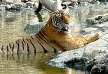 Ranthambore Sanctuary closes for monsoon