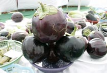 Vegetable exhibition in Bhopal