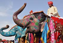 The Elephant festival in Jaipur