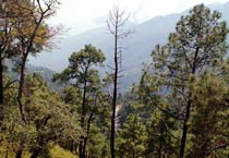 At home in Himachal