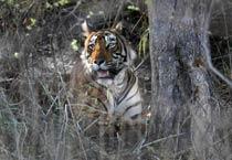 Ranthambore: Nature lover's paradise