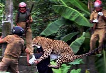 West Bengal: Leopard injures 11 people before dying