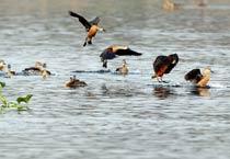 Santragachi Jheel, haven for migratory birds