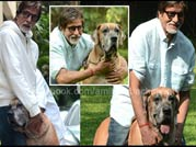 Amitabh Bachchan's rare pictures