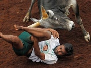 Bull-taming festival takes place in Chennai