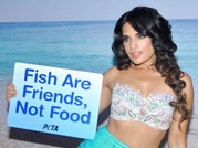 Richa Chadda turns mermaid for PETA's new ad campaign