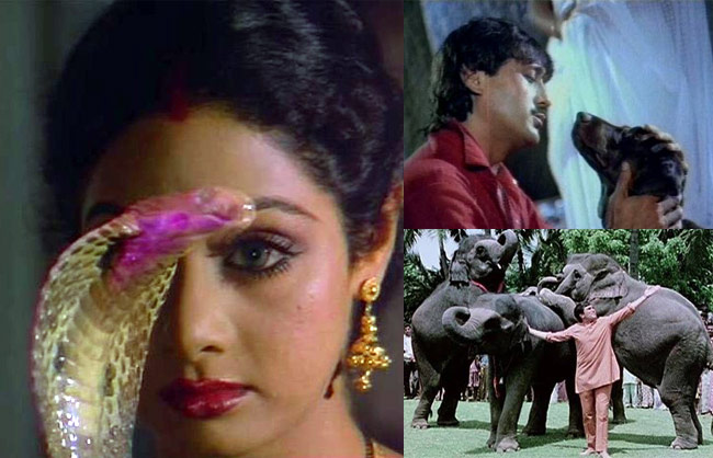 From playing cupid to saving the hero/heroine's life, animals have gone beyond just being pets in cinema. Here's taking a look some of the most memorable roles played by canines, pigeons, tigers and elephants.