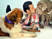 From Amitabh, Salman to Miley and Paris: Celebs and their love for pets