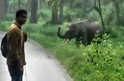 Elephant chases selfie lovers in Kerala