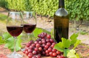 Monsoon travel: Top 5 wine destinations in India