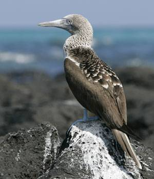 Galapagos Islands is a set of 19 remote volcanic islands that is home to a unique biodiversity. The presence of a wide range of endemic species on these islands is said to have inspired Charles Darwin's theory of evolution by natural selection.