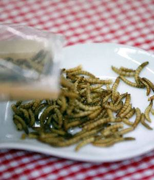 From mealworm cookies to crispy crickets, South Koreans are trying to make insects more palatable and mainstream.