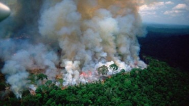 Amazon Rainforest burns at record rate