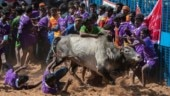 Jallikattu festival 2020: In photos