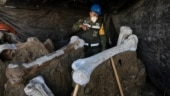 Construction workers unearth mammoth skeleton at site of Mexico City's new airport | World in pics
