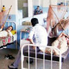 Dengue cases likely to rise post-rains in Delhi