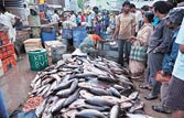 Delhi: Toxic formalin being used to preserve fish