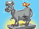 Politics of the holy cow