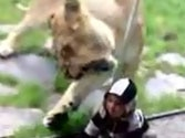 Video showing lioness trying to eat baby at Oregon zoo goes viral