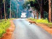 Botched tiger death register rings alarm