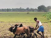 Met downgrades monsoon forecast, rules out drought