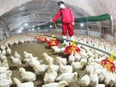 New technology speeding progress on Bird flu vaccine
