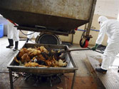 WHO data on bird flu raises new questions about human transmission