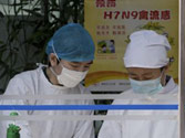 China bird flu: How H7N9 virus infects humans still a mystery for experts