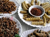 Man has eaten 5,000 species of insects