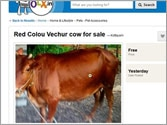 Rural India selling cows, buffaloes on OLX, Quikr