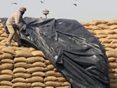 Food security to cost Rs 23,800 crore, says Maken