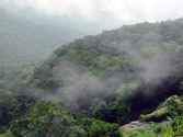 Kerala priests and politicians unite to oppose Gadgil report on Western Ghats