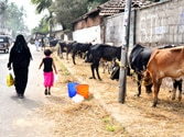 Maneka Gandhi's video makes Chandy shell shocked, now wants the cattle to have painless death