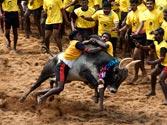 Over 100 injured during Jallikattu rage in Tamil Nadu