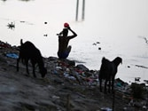 National Green Tribunal seeks ban on construction near Yamuna