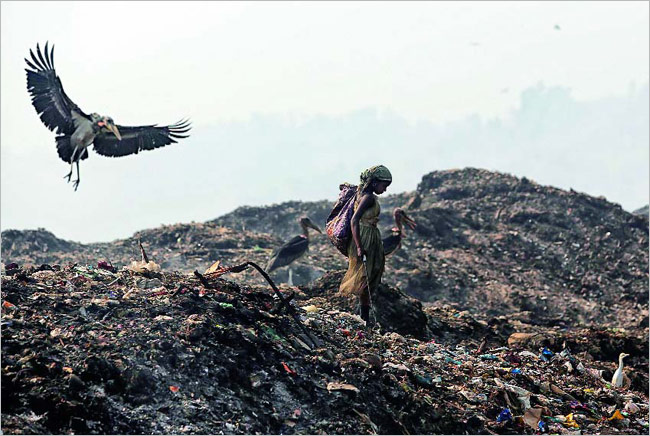 Another Day in Dystopia: A rag-picker goes on her daily round of retrieving recyclable items from a garbage dump,obl ivious to an endangered Greater Adjutant Stork flying past her on the outskirts of Guwahati.